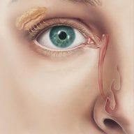 Vias lacrimais (ícone grande)